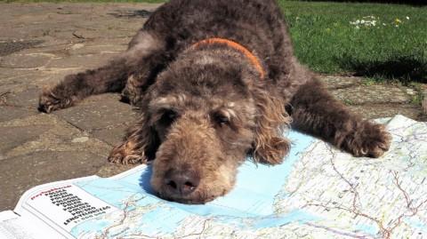 Roadtrip Polen mit Hund – Reiseplanung