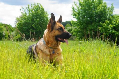 Was macht eigentlich einen guten Hundehalter aus?