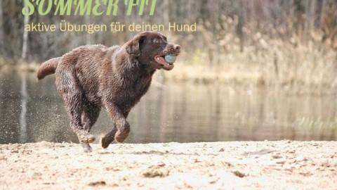 Sommer Fit – Aktive Übungen für die Fitness deines Hundes (mit Trainingsplan)