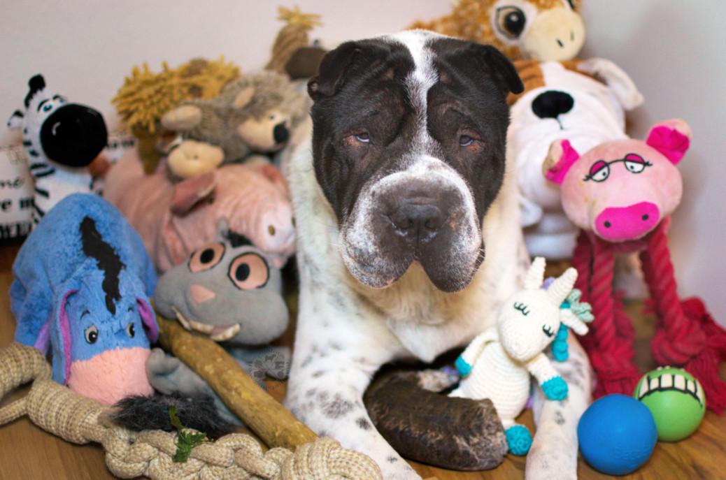 Spielweise Kuscheltier Spielzeug Hund Hunde Shar Pei Spielen Blog Hundeblog Ikea Feelilia Bälle Trixie Zoo Kauholz hart herrlich grob sanft Malous Rabaukenbande Kingston