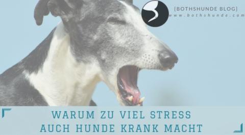 Warum zu viel Stress auch Hunde krank macht