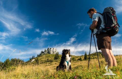 Fünf Tipps, um euren Hund fit fürs Wandern zu bekommen