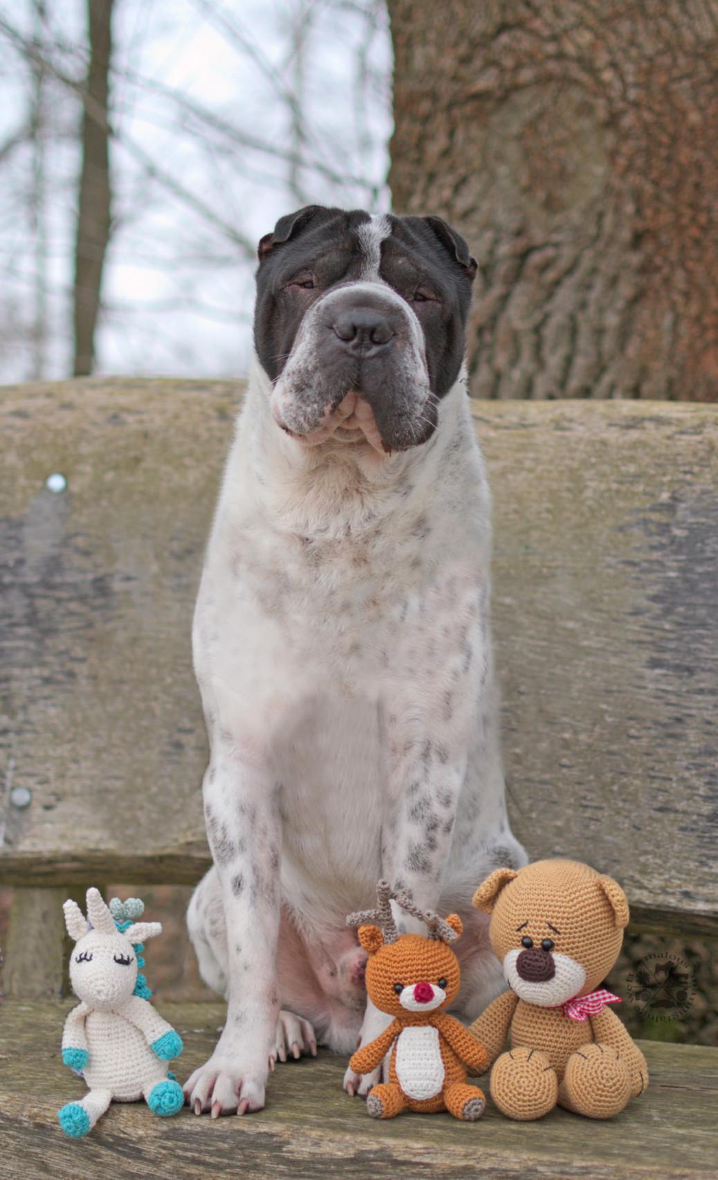 Tagebuch Kingston Hund Hundeblog Hunde Rentier Teddy Einhorn Ausflug Joggen Eschede Shar Pei Rabaukenbande Pubertät Hormone Musterknabe Erziehung Begegnungen Winsen