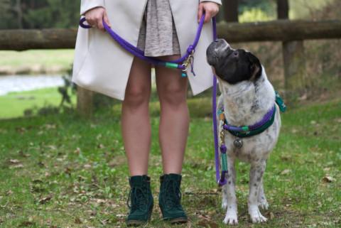 Test: Leinenset D.Dogs 740 (Werbung)