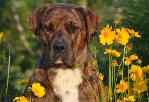 Hunde, unsere wahren Therapeuten