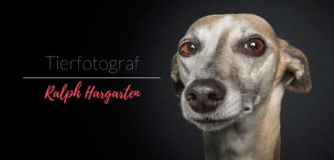 LIEBLINGS-PFOTOGRAPH : RALPH HARGARTEN