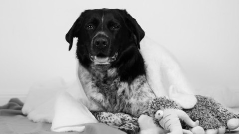 Tierkommunikation: Wie geht das?