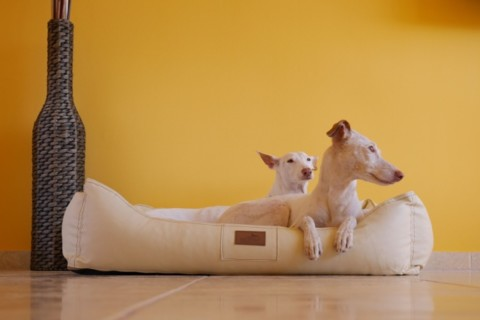 Der richtige Schlafplatz für deinen Hund – was ein orthopädisches Hundebett bewirkt! Produkttest