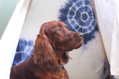 In 3 einfachen Schritten zum DIY Hunde-Tipi
