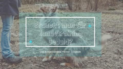 Hundetraining – braucht man da etwa Geduld?