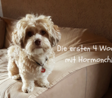 Woche 4 mit Hormonchip: UnsereErfahrungen