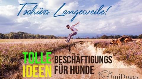 """midoggy Blogparade """"Tschüss Langeweile! Beschäftigungsideen für unsere Hunde"""""""