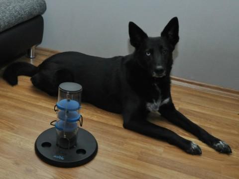 Intelligenzspielzeug – etwas für die kleinen grauen Hundezellen