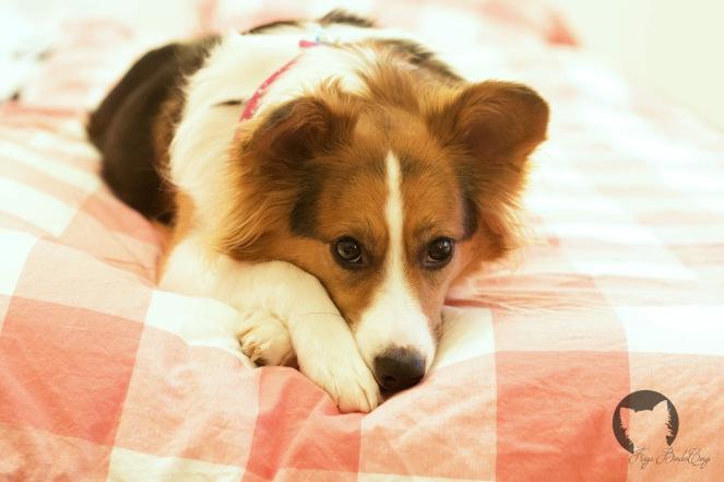 Hund im Bett - ja oder nein?