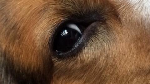Aufreger der Woche – Was ist ein Hundeleben wert?