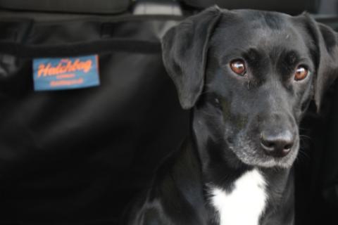 Kofferraumschutz von Hatchbag