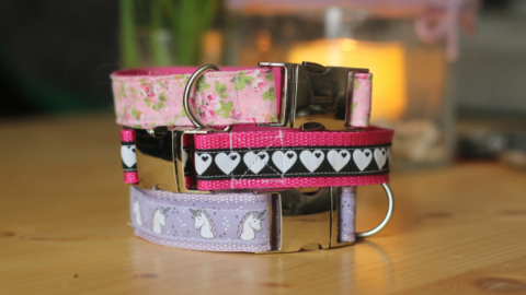 DIY – Hundehalsband aus Gurtband