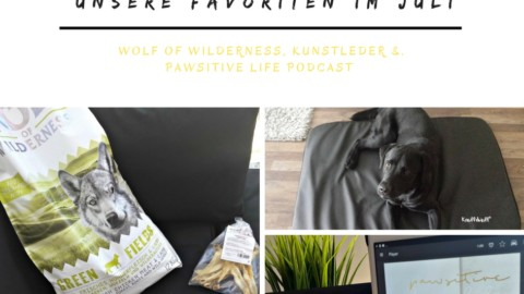Wolf of Wilderness, Kunstleder & Pawsitive Life Podcast – unsere Favoriten im Juli