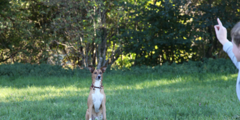 Hundetraining oder Coaching für den Menschen? – Was du über den Unterschied unbedingt wissen solltest