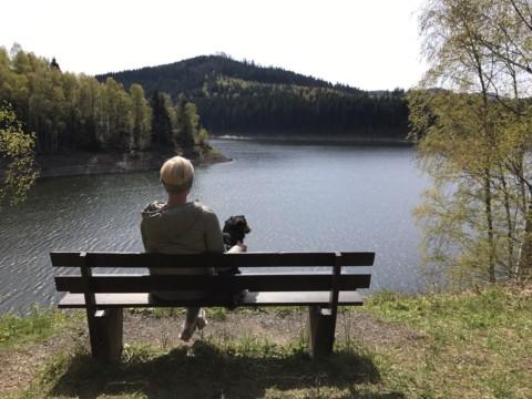 Auf 4 Pfoten im Harz