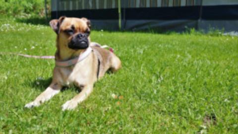 BloggerParade – Urlaub, mit oder ohne Hund?
