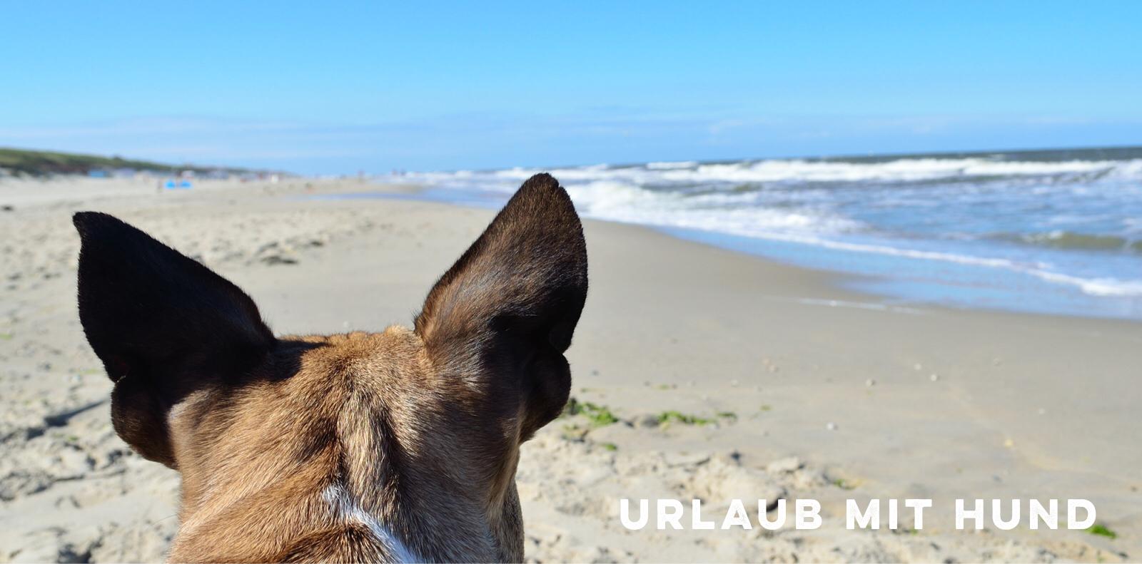 Urlaub mit Hund miDoggy