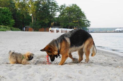 Warum Hunde Urlaub brauchen