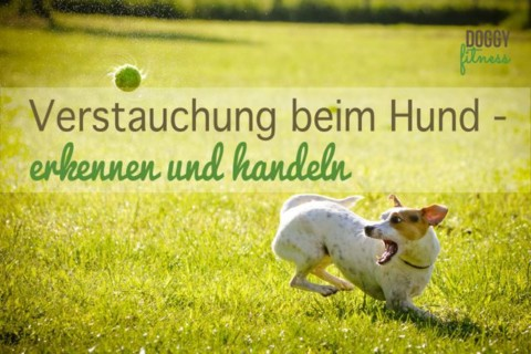Verstauchung beim Hund – wie du sie erkennst und was du tun kannst
