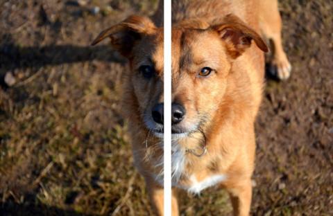 Dogsharing // Der geteilten Hund, toller Trend oder Tierquälerei?