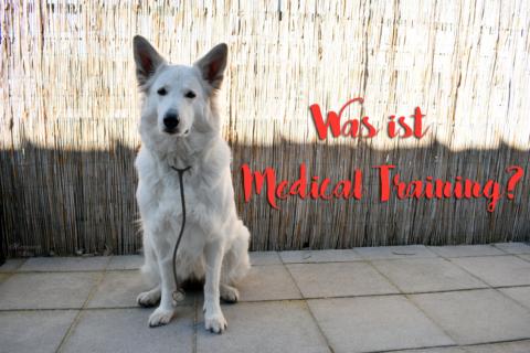 Was ist Medical Training und wozu braucht man es bei Hunden? [Werbung]