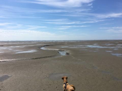 Wat(t) erleben – Wattwandern mit Hund