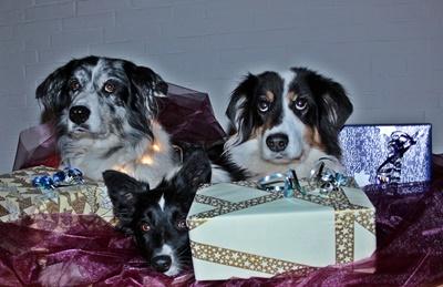 Hundekekse Weihnachten selbermachen