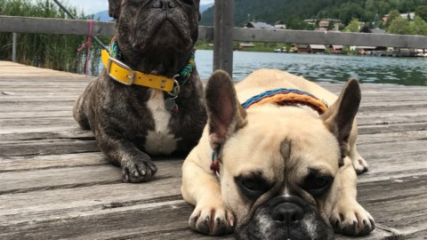 Eine Hundereise ins Kärntner Land