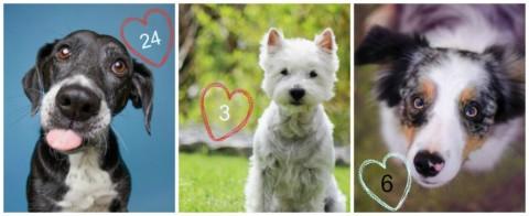 Helft Alma, Sprottenhund und Kessie!