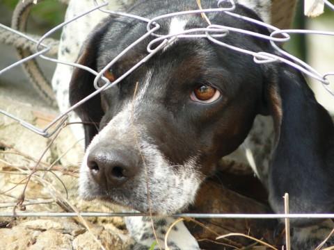 5 Tipps für den Umgang mit Angsthunden