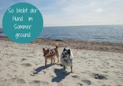 So bleibt der Hund im Sommer gesund