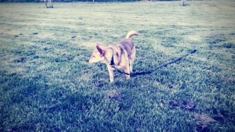 Warum es dir nichts bringt, wenn du deinen Hund bestrafst