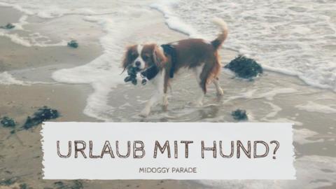 Urlaub mit Hund – ja oder nein? [miDoggy Parade]