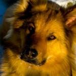 Profilbild von Tiergezwitscher
