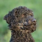 Profilbild von Blacky