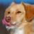 Profilbild von Paolo
