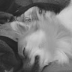 Profilbild von Lou
