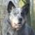 Profilbild von Wally von MeinHund24
