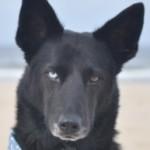 Profilbild von Rico