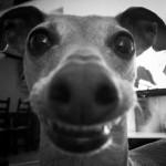 Profilbild von Lola, Profitesterin