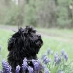 Profilbild von Cleo