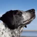 Profilbild von Jessi