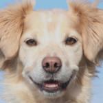 Profilbild von Shamrock McGuinness