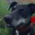 Profilbild von Lotte