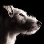 Profilbild von Sammy